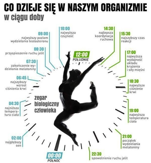 zegar-biologiczny-jpg